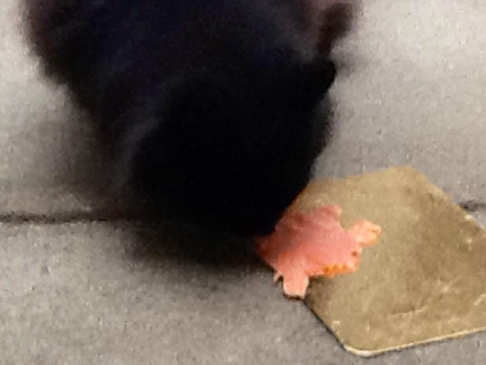 Sophie Loves Salmon