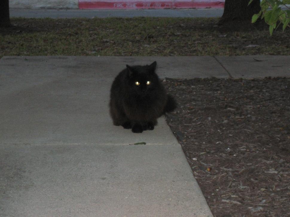 Poor Little Homeless Kitty aka Sophie