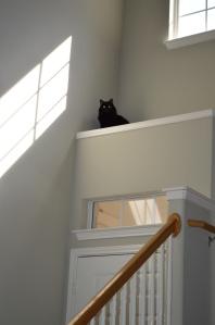 Look, mom, no paws!