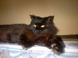 Annoyed cat--doesn't like the flash
