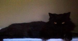 Sophie and Her Slanted Golden Eyes, Settling In