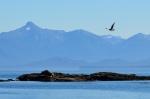 Sea Birds and Glaciers
