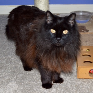 Sophie-The Black Lion