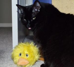 Sadie--Quacks like a duck.
