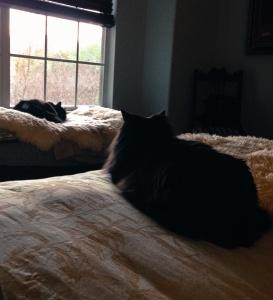 Sophie & Sadie