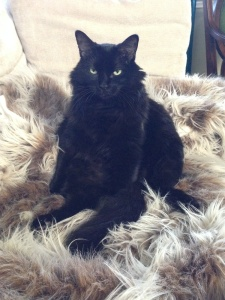 Sadie on Fur