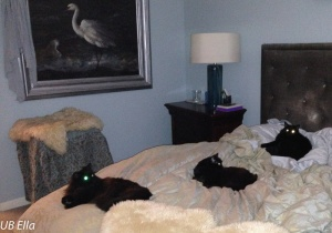 Three Black Cats: Sophie, Sally & Sadie (from left to right)