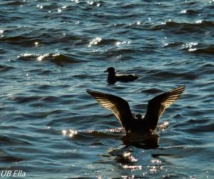 Gulls at Dusk